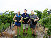 Margan Family Wines - Sustainable, Integrated Wine and Food Experiences