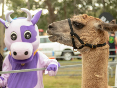 Tocal Field Days
