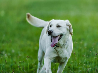 More parks for playful pooches