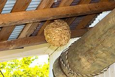 害虫・蜂の巣駆除も即日対応