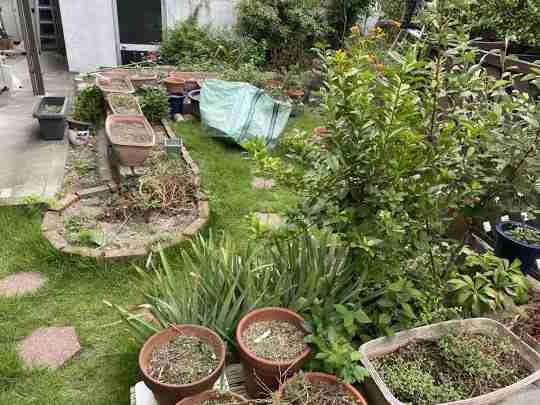 茨木市にて草刈り・植木鉢回収のご依頼
