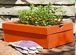 sneaker planter using shoe box.png
