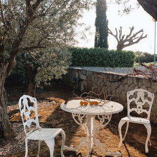 Villa garden with olive and orange trees