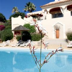 Villa from poolside