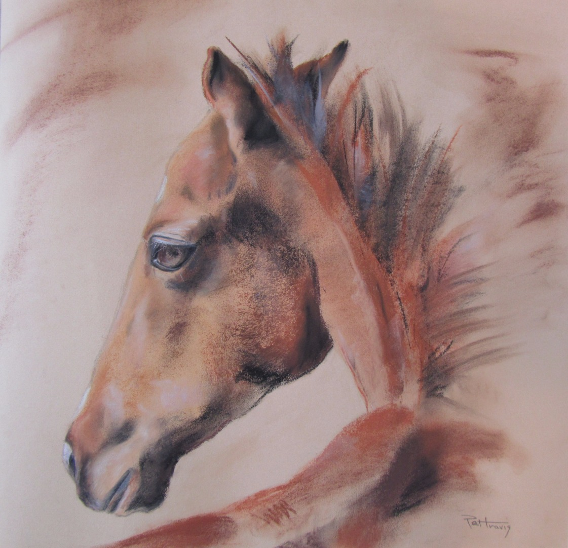 Yearling 19 1/2 X 20