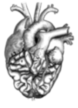 Das theoretische Arbeitsorgan HERZVERSTAND umschreibt sinnbildlich das enge Zusammenspiel zwischen Markt, Produkt, Strategie und Marke, mit dem Grundsatz, dass sich Verpackungsdesign der Markenpersönlichkeit unterordnet. Das Herz (Muskel) stellt dabei den Markt und die Produktidee dar, dass sich fortwährend bewegt und zu Neuem anregt. Das Gehirn (Nervengewebe) als zentrales, komplexes Steuerungsorgan stellt die Marke und deren Strategie dar. Die Venen saugen Informationen (Briefing) an und die Arterien stossen Lösungen (Verpackungskonzepte) aus.