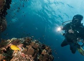 Mergulho noturno com cilindro: O que você precisa saber para aproveitar com segurança.