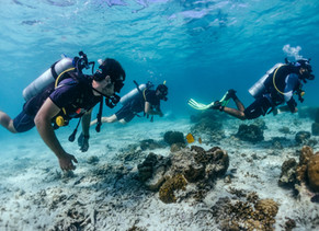 Interested in learn to scuba diving? Get to know the step by step how to become a Open Water diver.