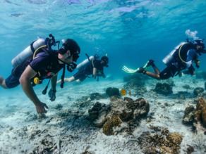 ¿Interesado en aprender a bucear? Conozca el curso de buceo Open Water Diver.
