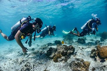Scuba Diving at Koh Tao
