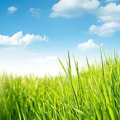 earth-friendly.jpg