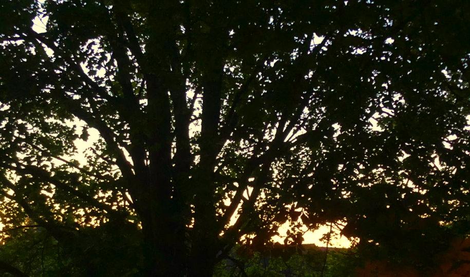 Kinecroft Dawn Walk