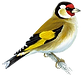 Goldfinch_edited.png