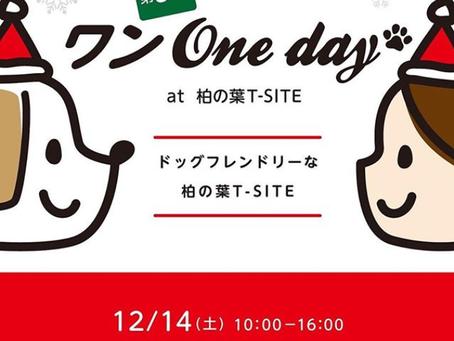 【12/14(土)ワンOneday🎄】
