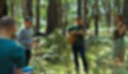 MMW MWW Forest 2a.jpg