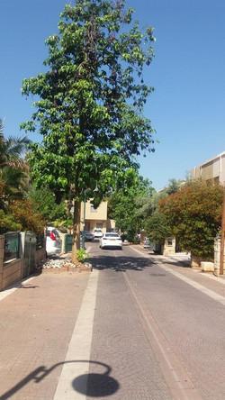 Katlav Street