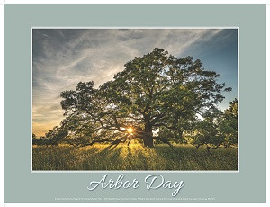 Commemorate Arbor Day while social distancing
