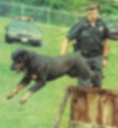 Southen Tier Police k9
