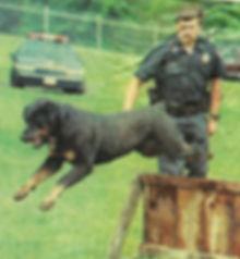 Southern Tier Police k9