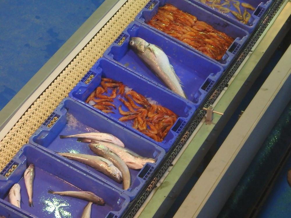 Foto subasta pescado