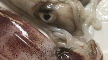 De la flota pesquera; el calamar de potera