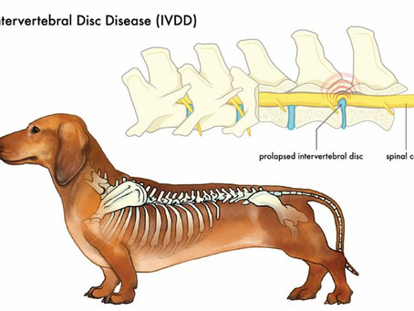 Lumbar IVDD & disc herniation: finding relief, healing, and prevention.