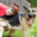 in stride canine animal adjustment 7-.pn