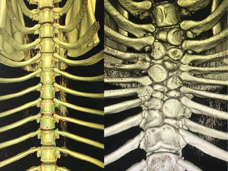 Why pet xrays are important