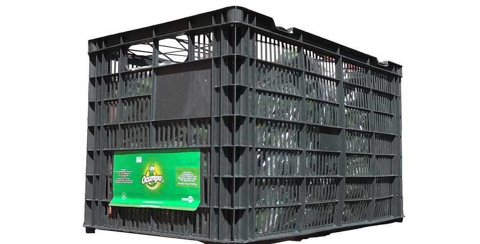 Plastic/ Wooden Box Cucumbers