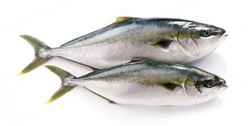 Fresh Hon Hamachi (Nature) (by weight lb.)