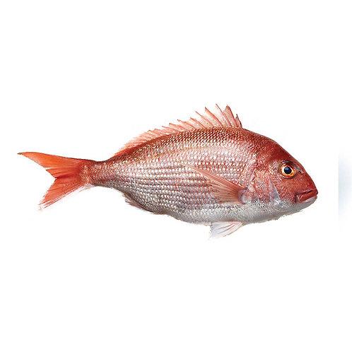 MADAI RED SNAPPER