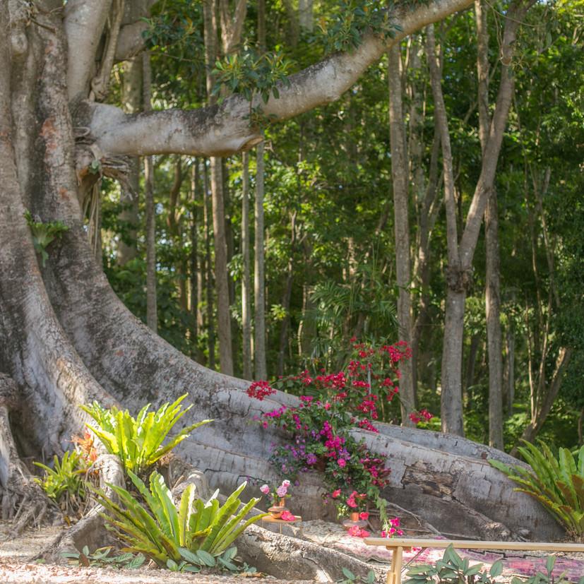 tree ceremony at Figs.jpg