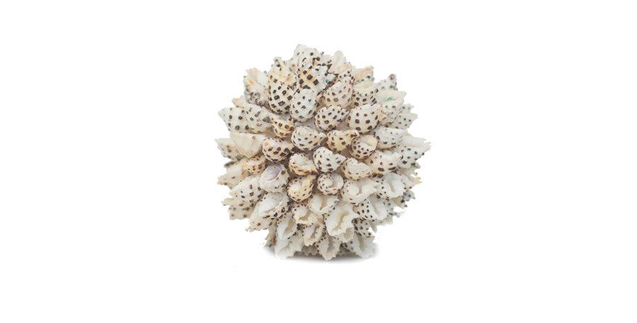 White Shell Cluster