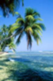 Sri Lanka beach with palm trees