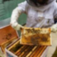 Ancoats Bees Interview Thumbnail.jpg