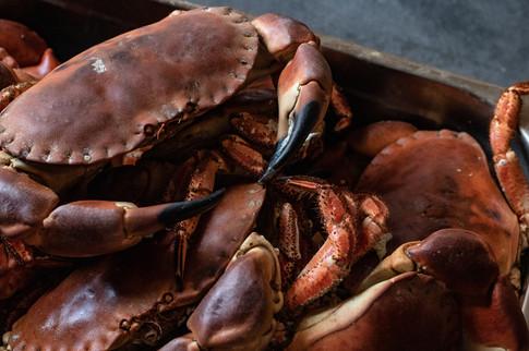 Crabs Small.jpg