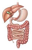 Sleeve Gastrectomy; Gastric Sleeve Surgery in Nashville, TN