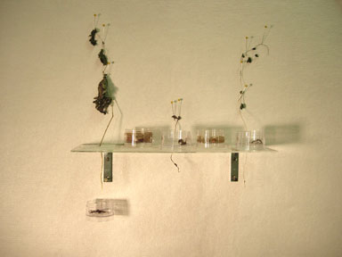 untitled (plant lab)