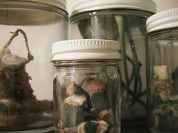 untitled (nysp jars)