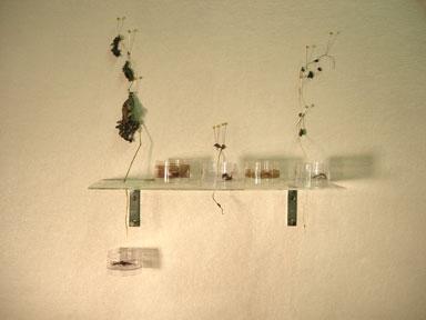 untitled (plant lab)