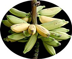 Banana - Dwarf Iholena-fruit_edited.jpg