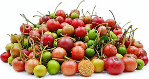 jamaican cherry.png