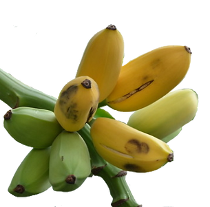 Banana - Manzano-fruit-transparent.png