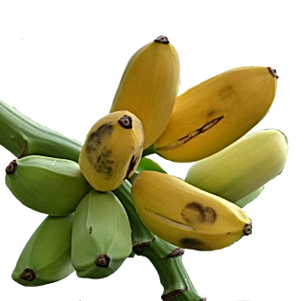 Banana - Manzano-fruit-transparent.png
