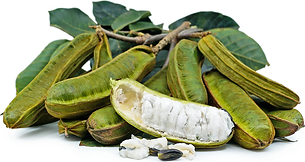 Ice Cream Bean fruit and flower.png