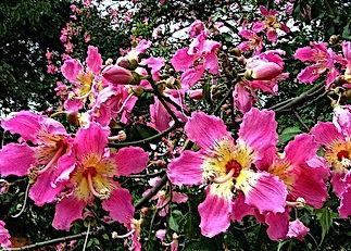 silk floss flower.jpg