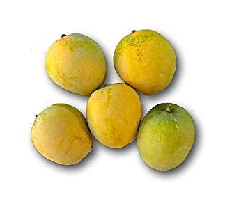 Mango - Pirie.jpg