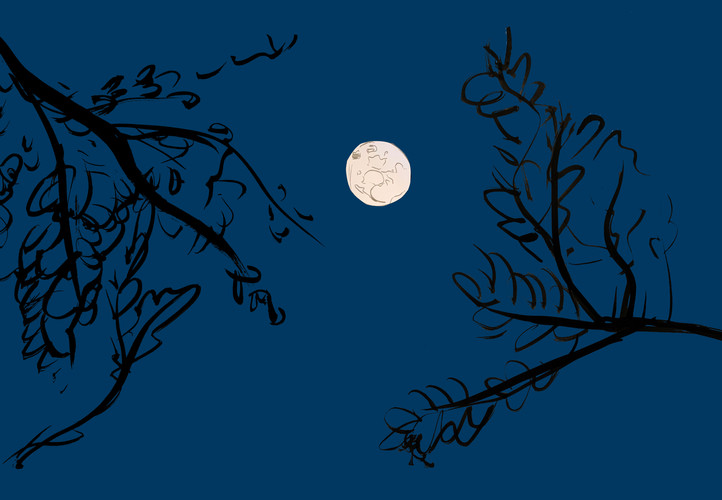 Moon Between The Branches