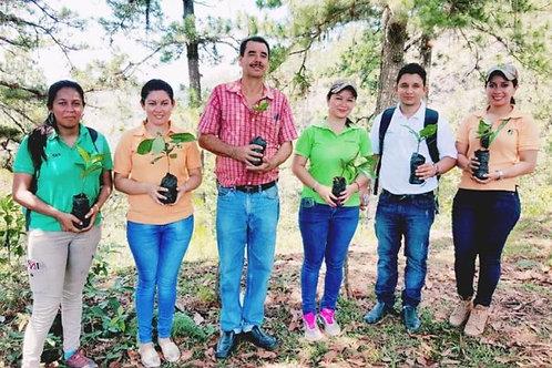 Honduras - COAGRICSAL Fairtrade/Organic/RFA -per Kg