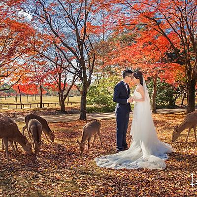 Nara Autumn 奈良紅葉